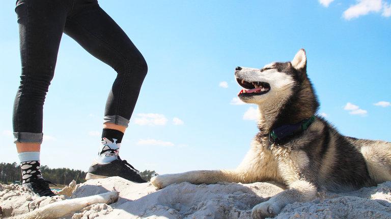 Dogs encourage exercise