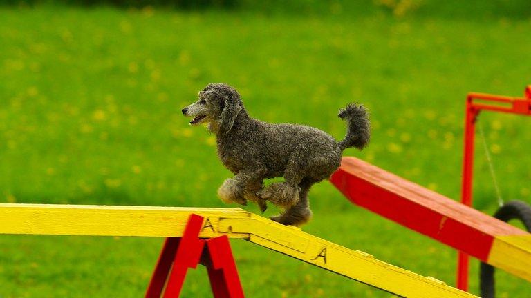 Dog Agility Equipment