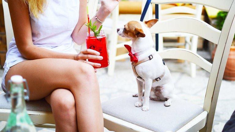Dog Friendly Restaurants, Pubs & Cafés
