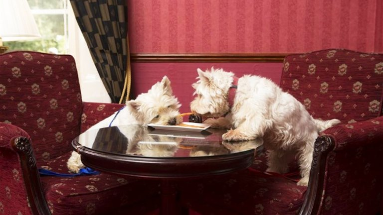 Dog friendly hotel chains