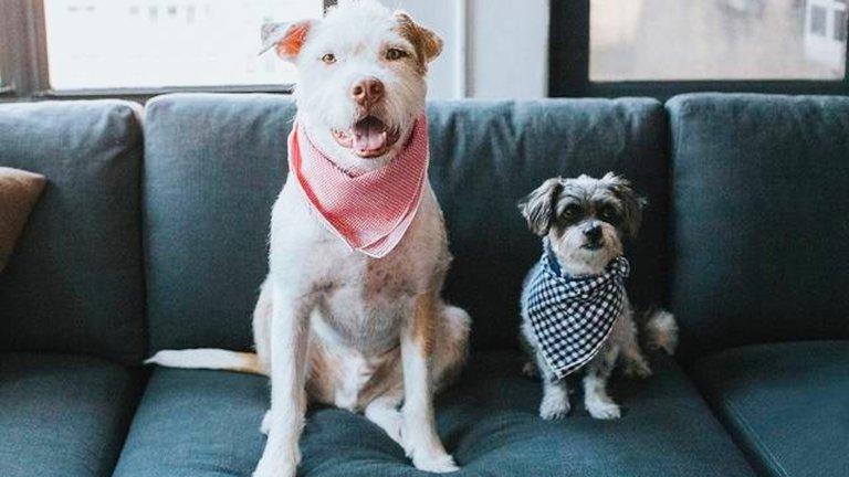 Dog friendly cafes