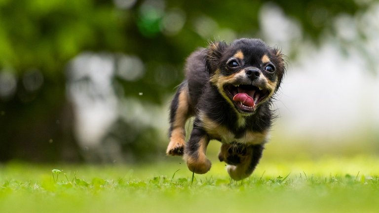 Dog Sport: 11 fun sports for you and your dog