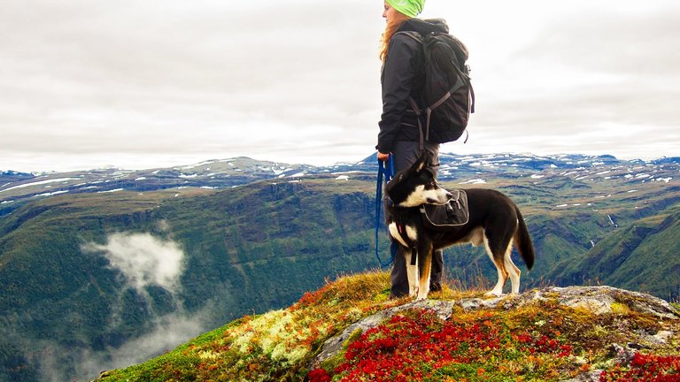 10 Dog Hikes to Add to Your Doggie Bucket List