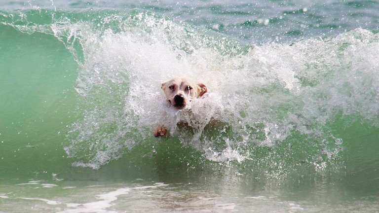 Dog Beach Surf