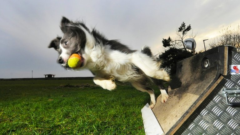 Flyball for Dogs: A dog sport for all breeds