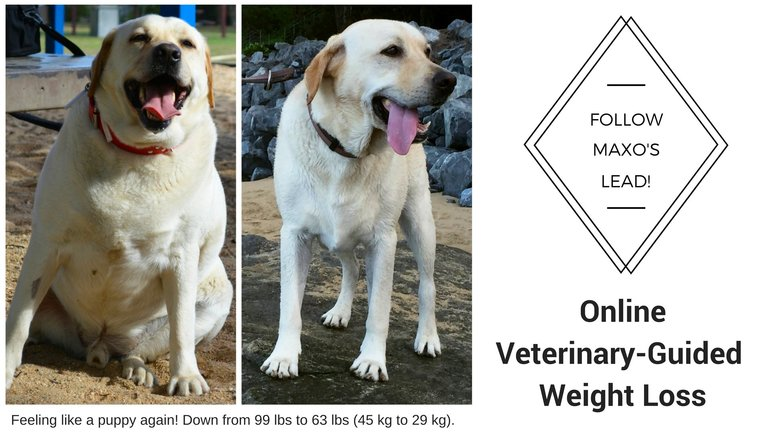Dog Slim Weight Loss Plan