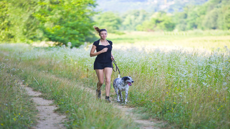 Commit to daily dog workouts with WAGSTA