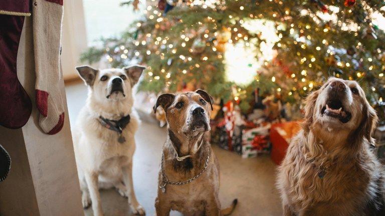 7 Tips for a Merry Dog Christmas