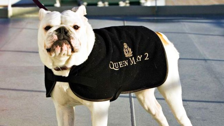 Dog Friendly Cruises