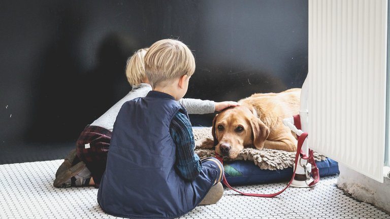 Dogs reduce childhood allergies