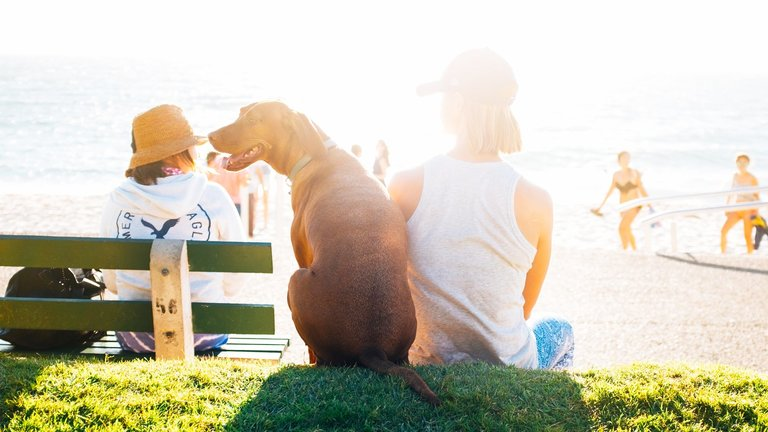 Dog Beach Safety Tips